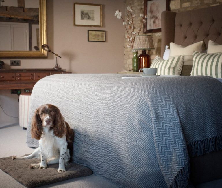 a cocker spaniel dog sat at the bottom of a double bed in a cosy and quirky hotel room